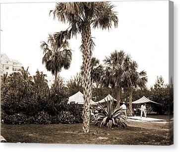 Royal Poinciana Canvas Print - Golf Links, Hotel Royal Poinciana, Palm Beach, Fla, Hotels by Litz Collection