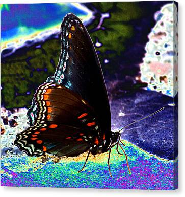 Gona-fly-butterfly Canvas Print by Kim Pate