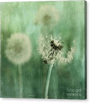 Gone Canvas Print by Priska Wettstein