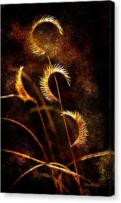 Canvas Print featuring the photograph Gone To Seed by Karen Slagle