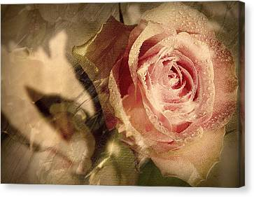 Gone With The Wind Romantic Rose Close-up Canvas Print