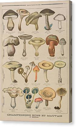 Mushroom Canvas Print - Good And Bad Mushrooms by French School