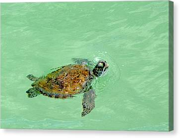 Canvas Print featuring the photograph Good Day For A Swim  by Susan  McMenamin