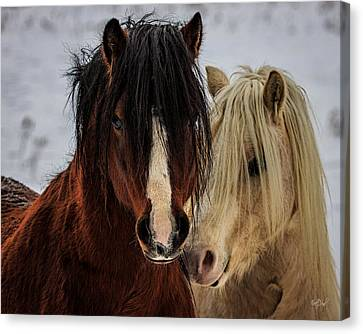 Stallion Canvas Print - Good Friends by Everet Regal