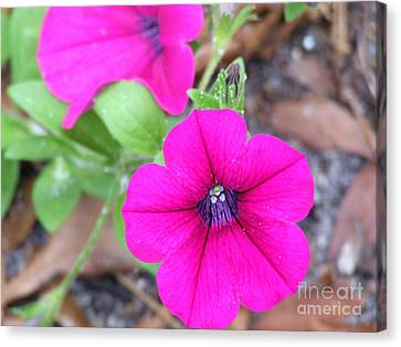 Canvas Print featuring the photograph Good Morning by Andrea Anderegg