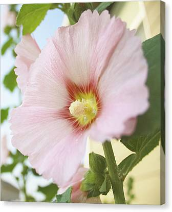 Good Morning Gorgeous Canvas Print