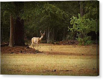 Good Night Deer Canvas Print by Linda Unger