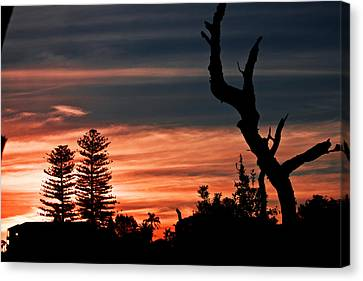 Canvas Print featuring the photograph Good Night Trees by Miroslava Jurcik