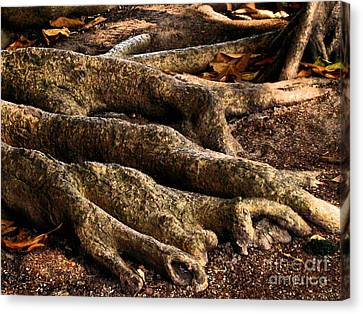 Good Roots Canvas Print by Claudette Bujold-Poirier