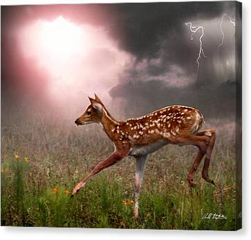 Goodbye Bambi Canvas Print by Bill Stephens
