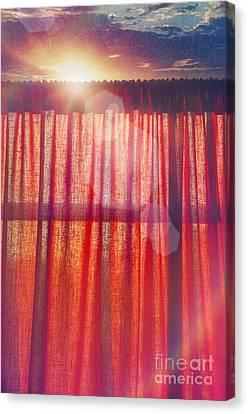 Stretched Cotton Canvas Print - Goodmorning Sunshine by Danilo Piccioni