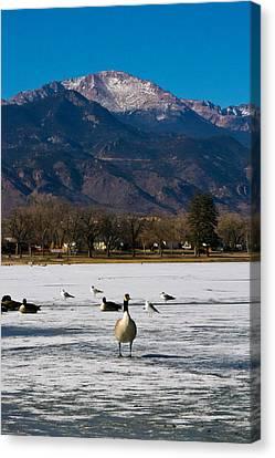 Goose At The Peak Canvas Print by Matt Radcliffe