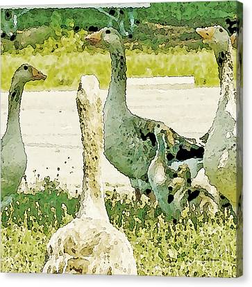 Goose Chat Canvas Print by Artist and Photographer Laura Wrede