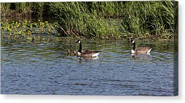 Canvas Print featuring the photograph Goose Family In The Water by Leif Sohlman