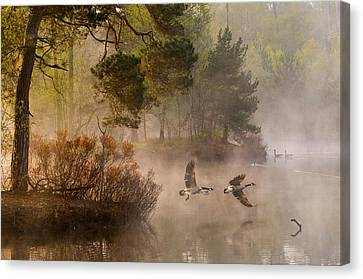 Goose Fight Canvas Print