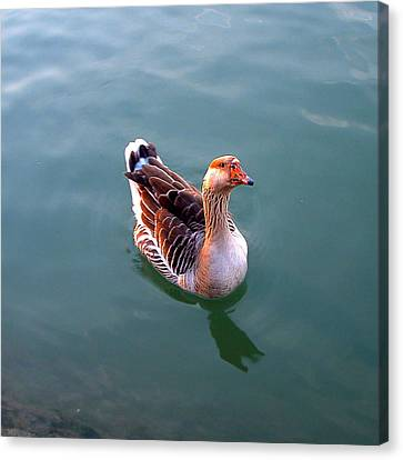 Goose Canvas Print by Marc Philippe Joly