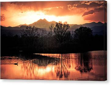 Goose On Golden Ponds 1 Canvas Print by James BO  Insogna
