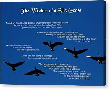 Goose Wisdom Canvas Print by Mike Flynn