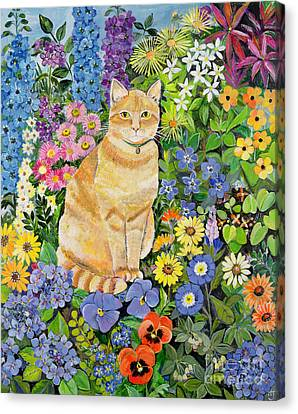 Gordon S Cat Canvas Print by Hilary Jones