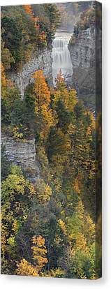 Gorge In Autumn Light Canvas Print by Timothy McIntyre
