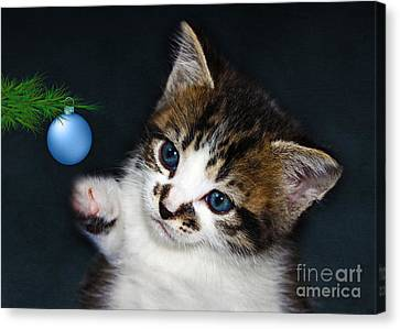 Gorgeous Christmas Kitten Canvas Print by Terri Waters