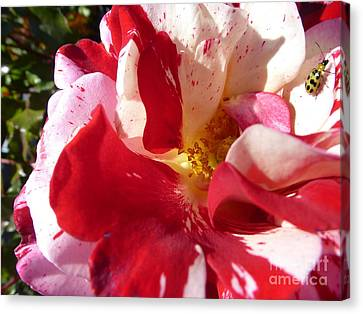Gorgeous Home Canvas Print by Anat Gerards
