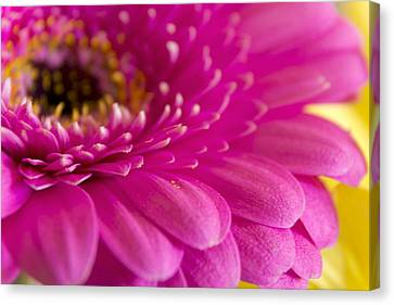Gorgeous Pink Flower Canvas Print