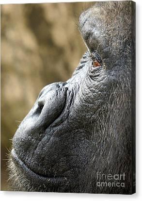 Gorilla Close Up Canvas Print by Rachel Munoz Striggow