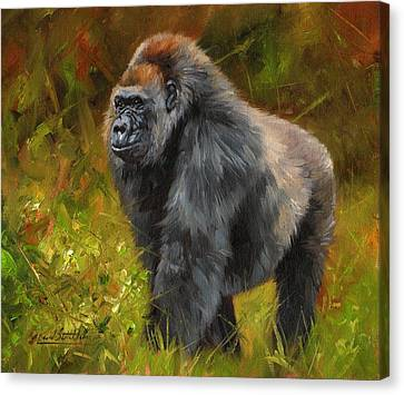 Gorilla Canvas Print by David Stribbling