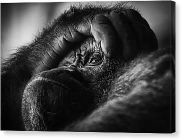 Canvas Print featuring the photograph Gorilla Portrait by Chris Boulton