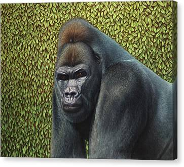 Primate Canvas Print - Gorilla With A Hedge by James W Johnson