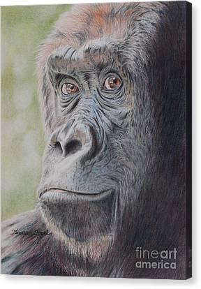 Gorilla's Gaze Canvas Print by Tamara Oppel