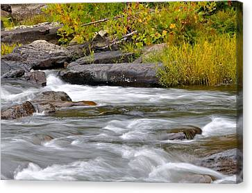 Trout Stream Landscape Canvas Print - Goshen Pass 5 by Todd Hostetter