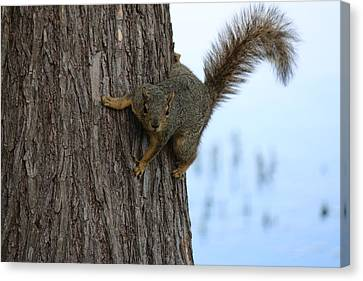 Lookin' For Nuts Canvas Print