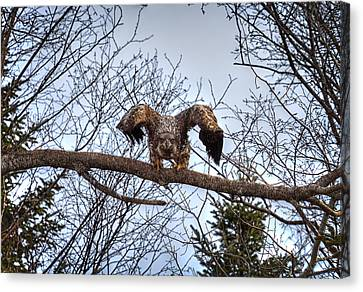 Got You - Great American Bald Eagle Canvas Print by Gary Smith