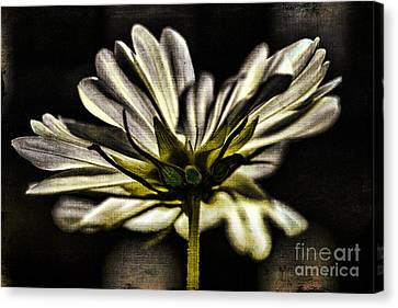 Got Your Back Canvas Print by Catherine Fenner