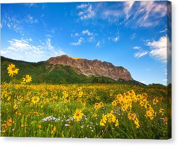Gothic Meadow Canvas Print by Darren  White