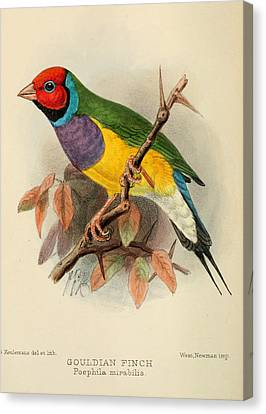 Gouldian Finch Canvas Print by Anton Oreshkin