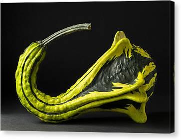 Gourd Green Yellow 4 A Canvas Print