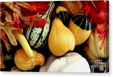 Gourd Group Of Fall's Bounty Canvas Print