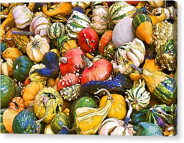 Gourds And Pumpkins At The Farmers Market Canvas Print