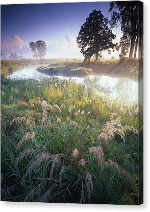 Grab Some Grass Canvas Print by Ray Mathis