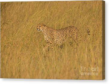 Grace And Elegance Canvas Print by Ashley Vincent