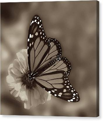 Grace Canvas Print by Don Spenner