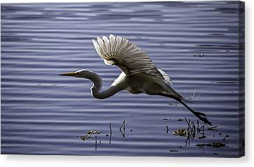 Grace In Motion Canvas Print by Lynn Palmer