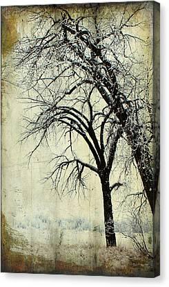 Grace Canvas Print by Leanna Lomanski