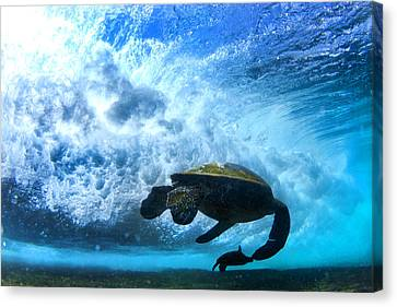 Grace Under The Waves Canvas Print by Sean Davey