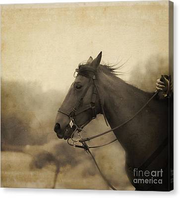 Graceful Beauty Canvas Print by Kim Henderson