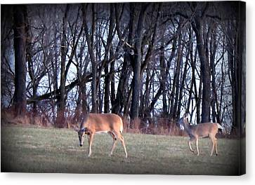Graceful Deers Canvas Print by Jose Lopez
