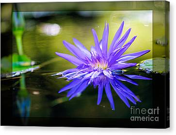 Graceful Divinity Canvas Print by Charles Dobbs